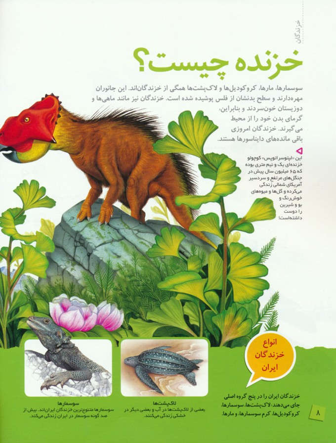 دانستنی های جانوران ایران و جهان (خزندگان)،(گلاسه)