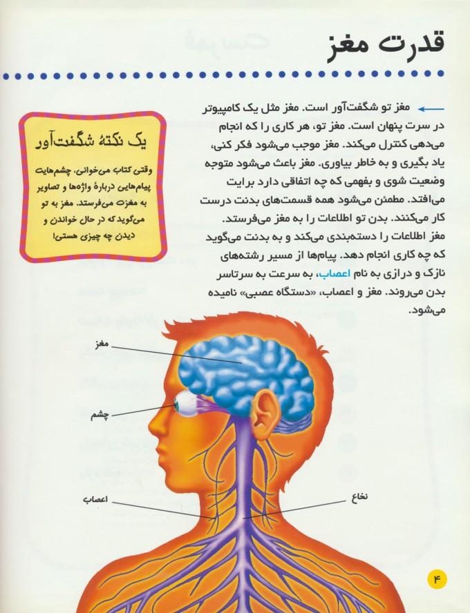 بدن من چگونه کار می کند؟ 1 (مغز،خون،تنفس)