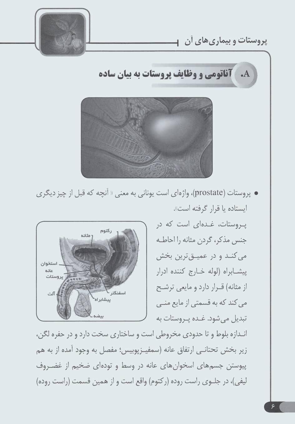 پروستات و بیماری های آن (راهنمای پزشکی خانواده)