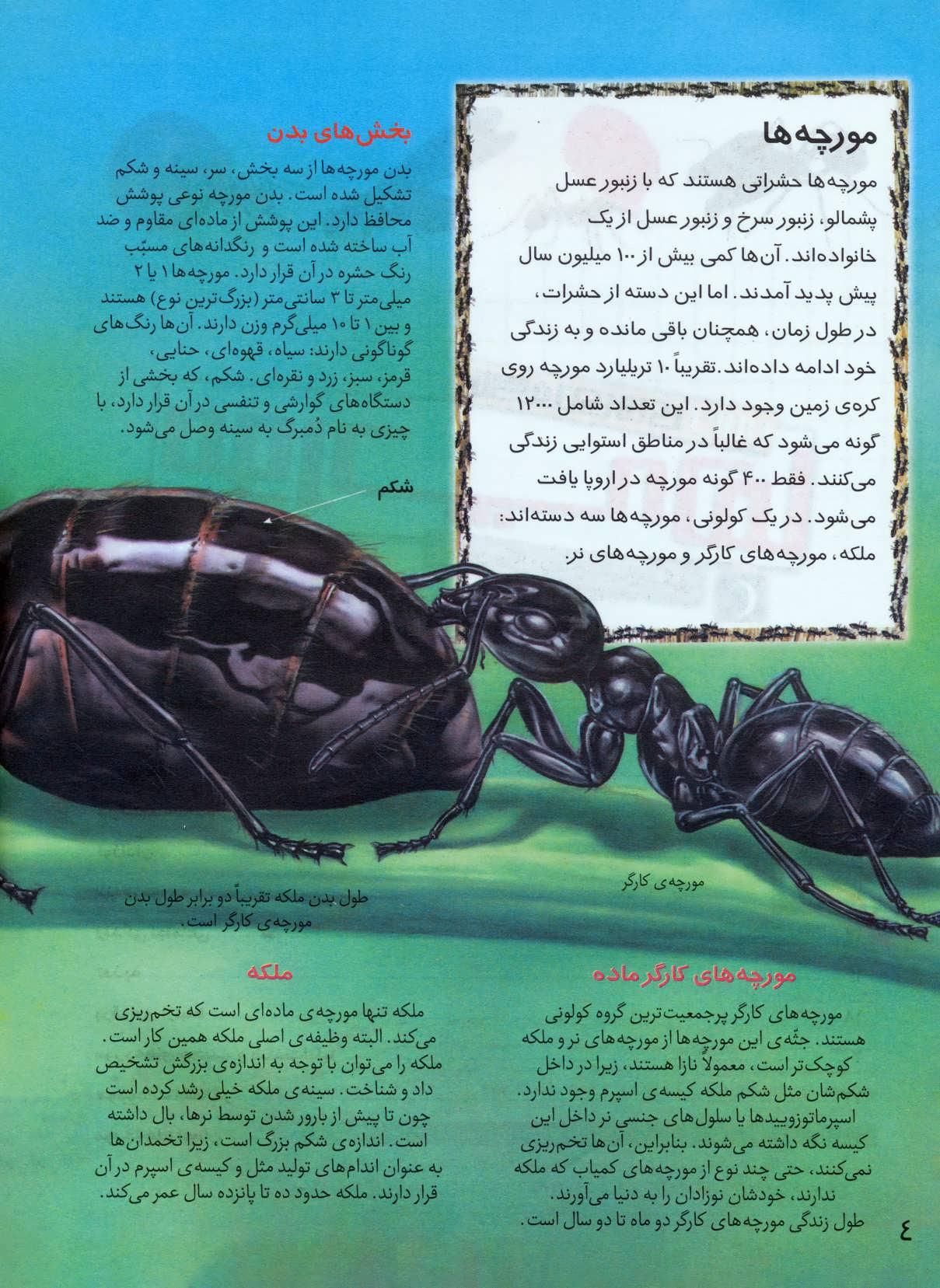 شگفتی های جهان (مورچه ها)