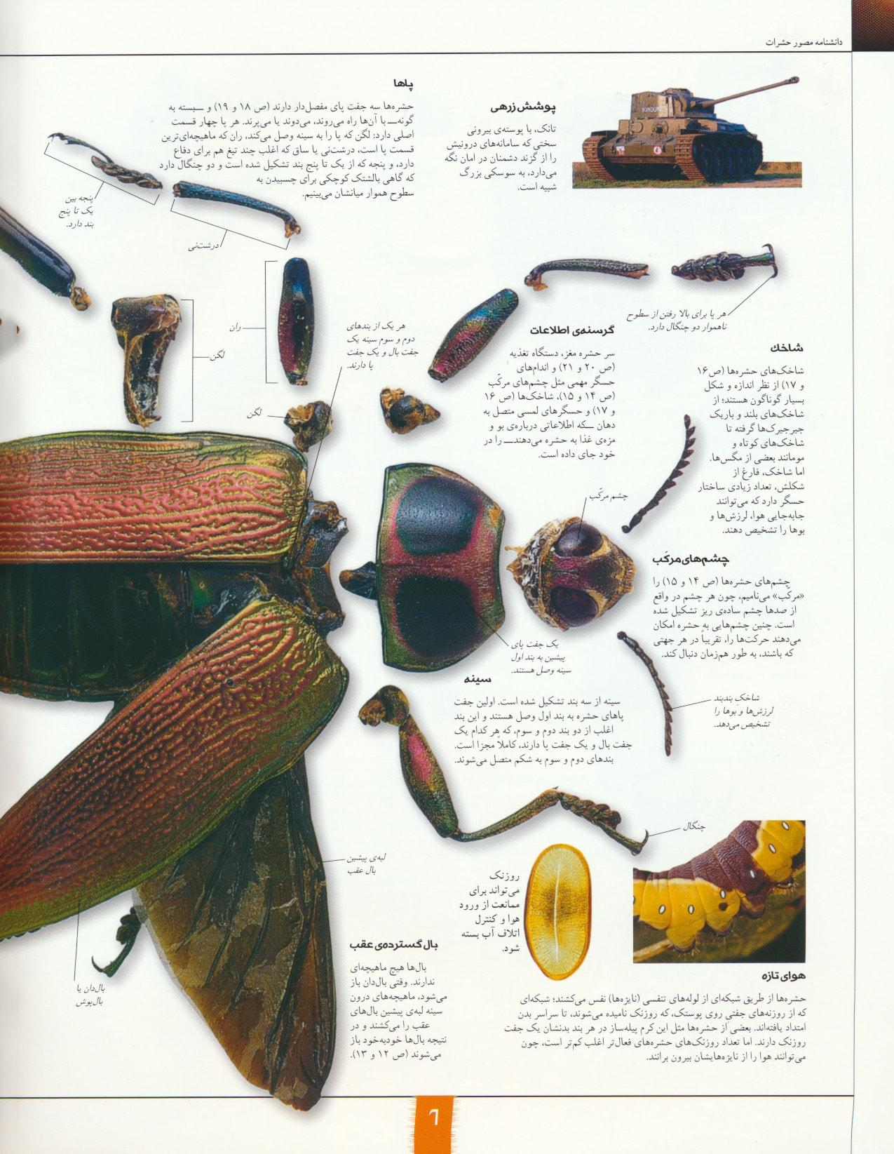دانشنامه مصور حشرات (گلاسه)