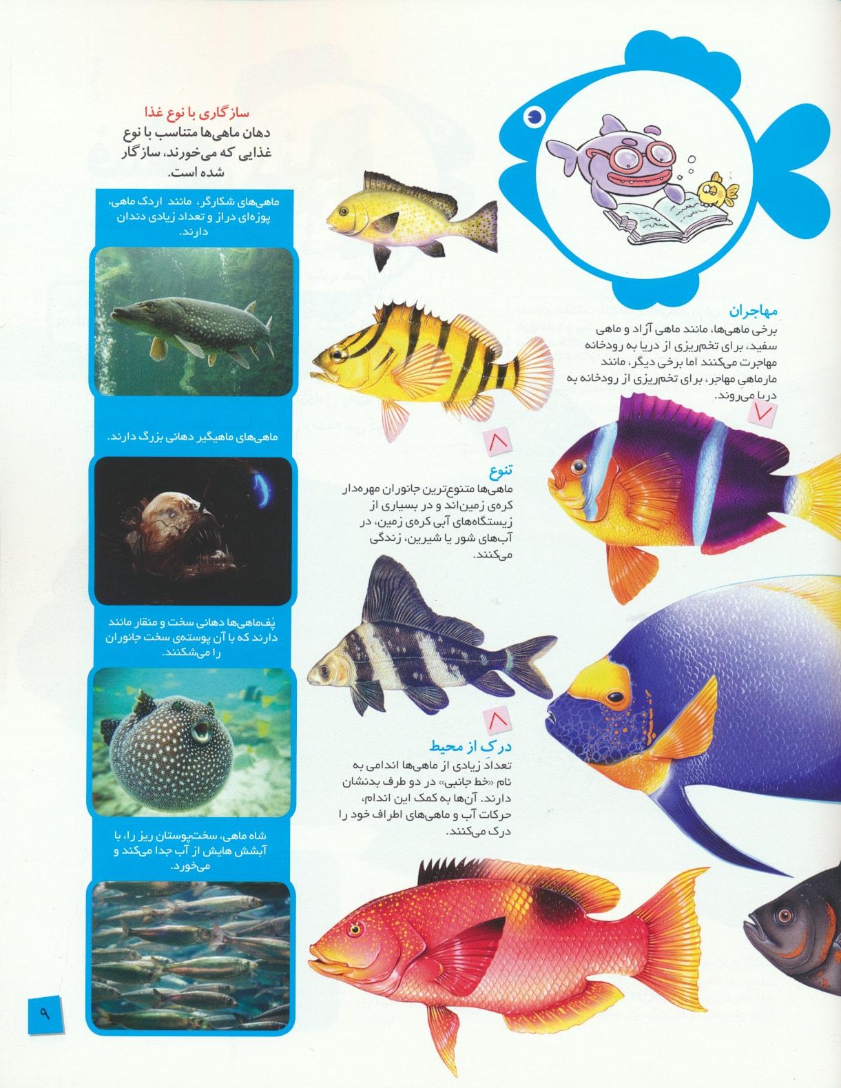 دانستنی های جانوران ایران و جهان (ماهی ها)،(گلاسه)