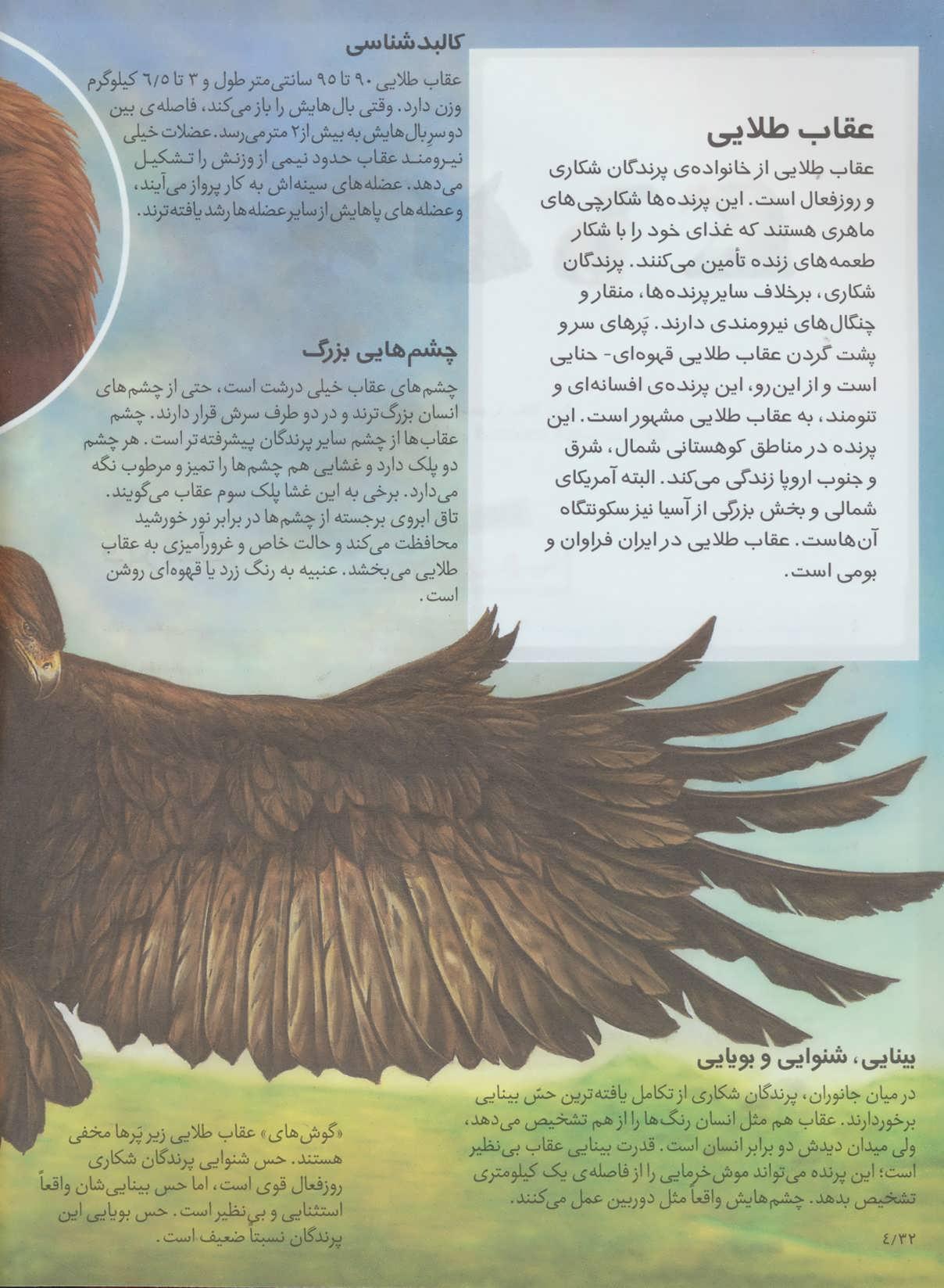 شگفتی های جهان (پرندگان شکاری)